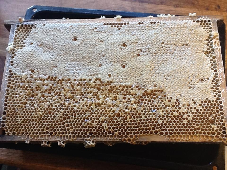 honungsram