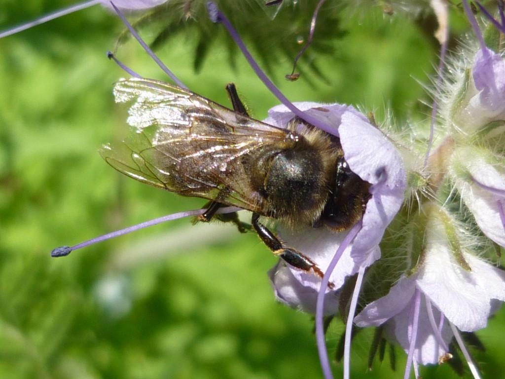 bi i honungsört
